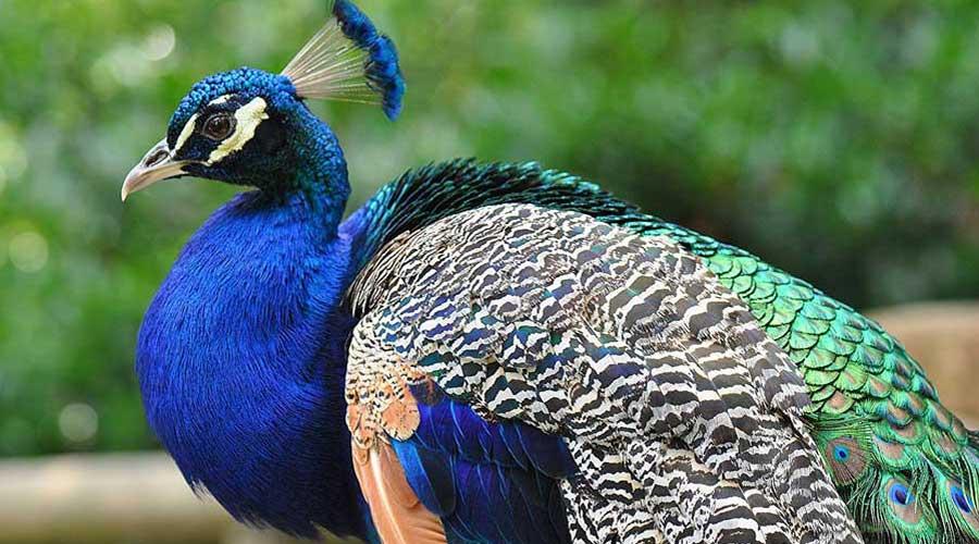 صورة اجمل الطيور في العالم , انواع الطيور الموجودة حاليا
