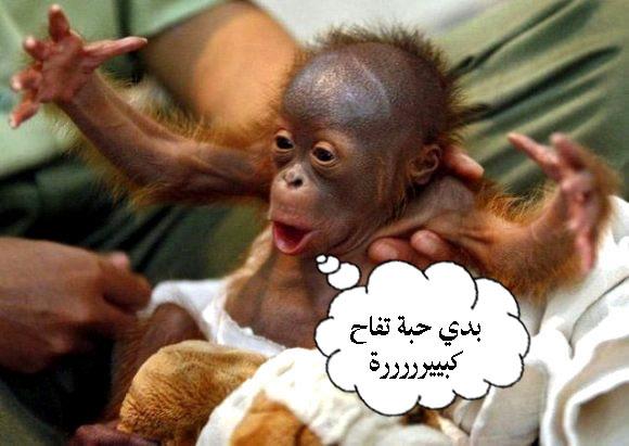بالصور اجمل الصور المضحكة مع التعليق , اروع كومنتات علي الصور الضحكة 4594 4