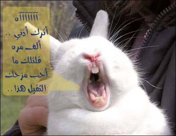 بالصور اجمل الصور المضحكة مع التعليق , اروع كومنتات علي الصور الضحكة 4594 5