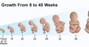 صور دليل المراه الحامل , كيف يمكنك الاطمئنان على طفلك طوال فتره الحمل