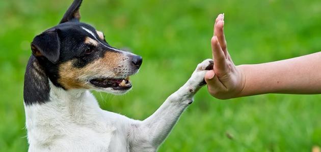 صور كيفية تدريب الكلاب , كيف تدرب كلب