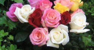 صور الورد , اروش صور ورد جميلة
