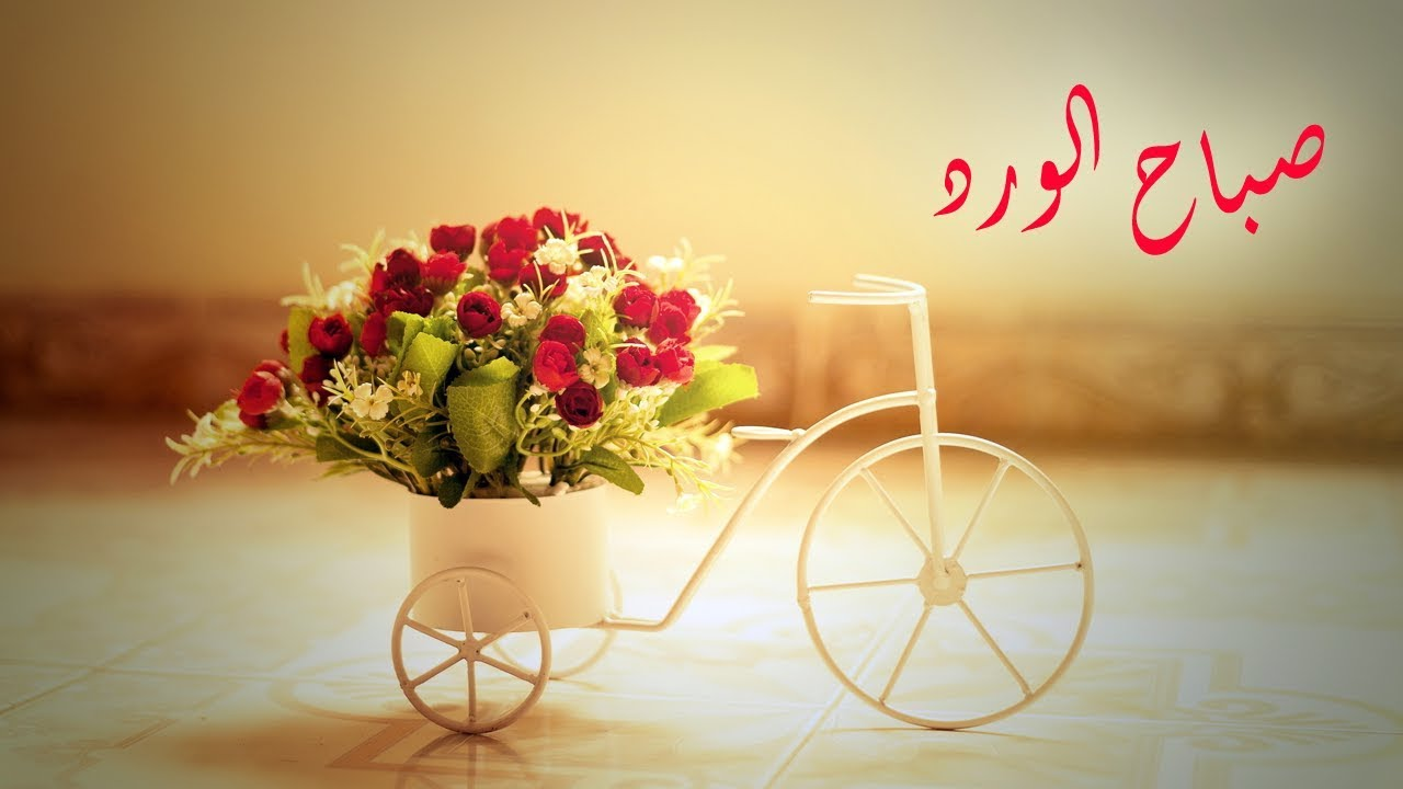 صور صباح الورد , جمال الورود و صباح الحب