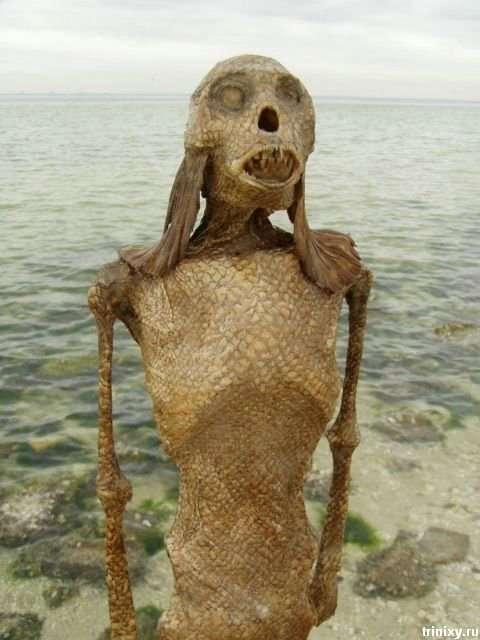 بالصور صور عروسه البحر , صور حوريات البحر 652 6