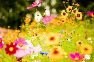 صور اجمل ورود العالم , صور لجمال و طبيعه الورد