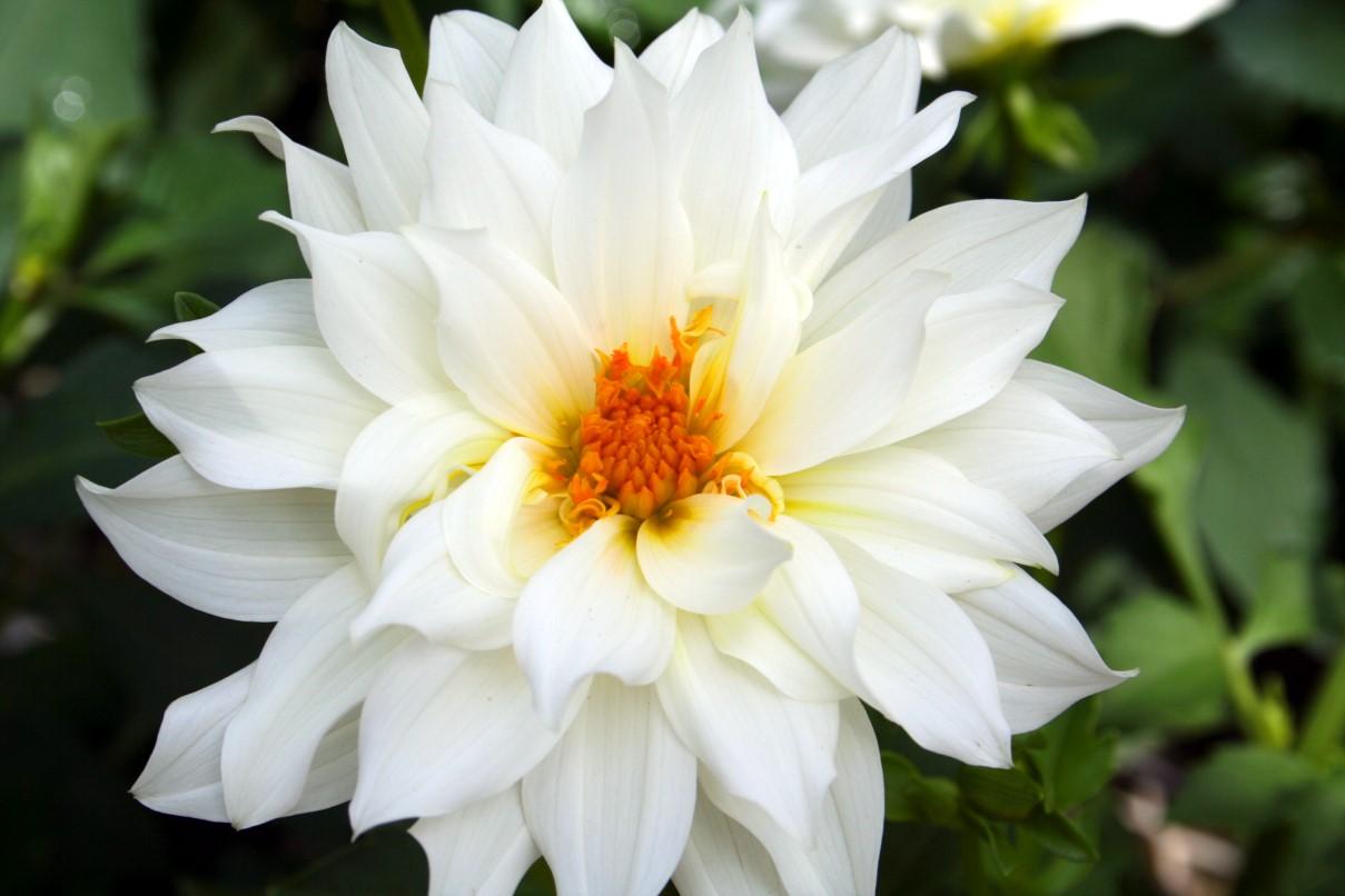 بالصور اجمل ورود العالم , صور لجمال و طبيعه الورد 247 2