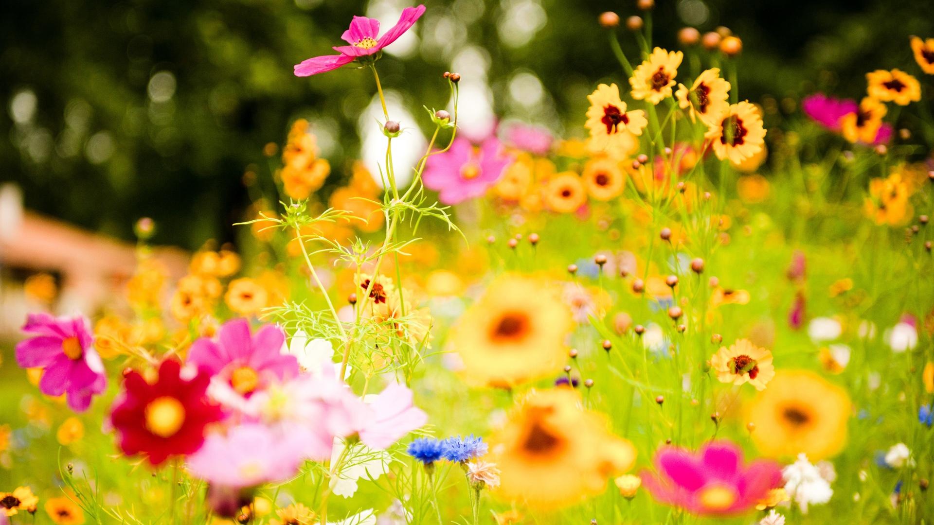 صوره اجمل ورود العالم , صور لجمال و طبيعه الورد