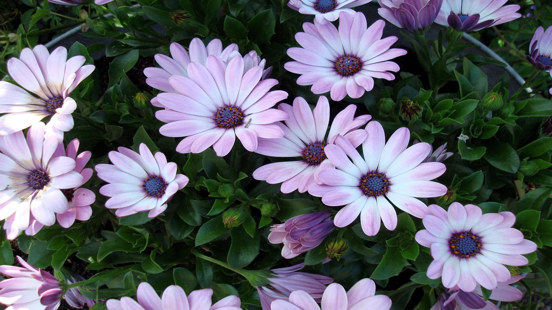 بالصور صور عن الورد , الجمال الطبيعى فى صور الورود 285 10