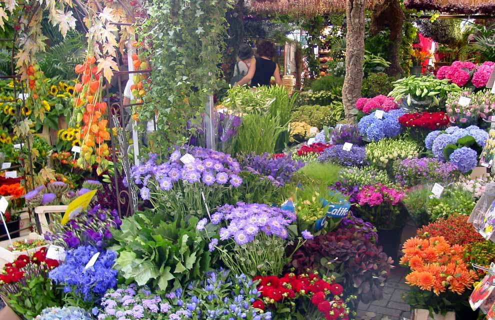 بالصور صور عن الورد , الجمال الطبيعى فى صور الورود 285 11