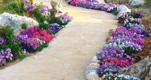 صور عن الورد , الجمال الطبيعى فى صور الورود