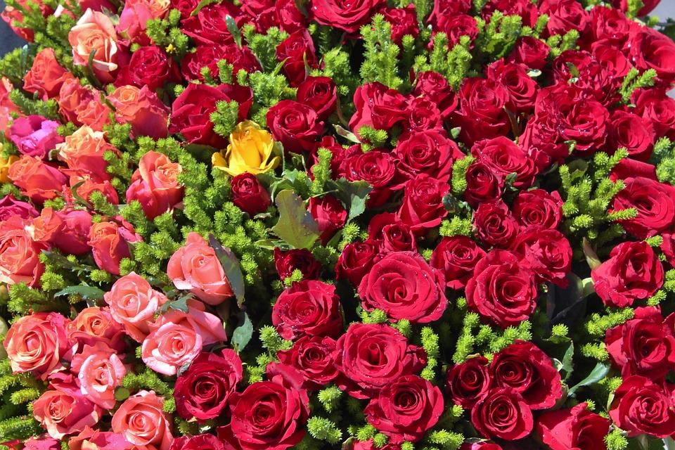 بالصور صور عن الورد , الجمال الطبيعى فى صور الورود 285 4