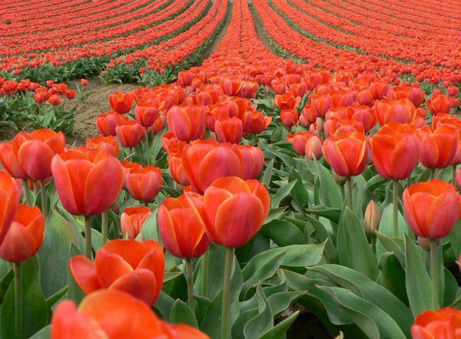 بالصور صور عن الورد , الجمال الطبيعى فى صور الورود 285 5