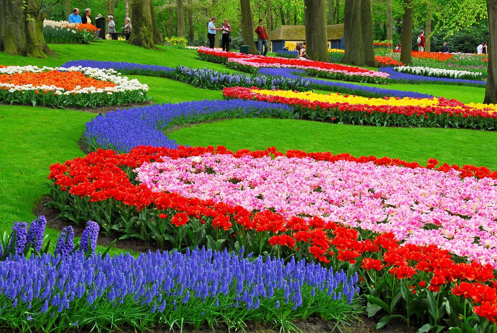 بالصور صور عن الورد , الجمال الطبيعى فى صور الورود 285 6