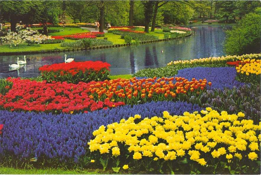 بالصور صور عن الورد , الجمال الطبيعى فى صور الورود 285 8