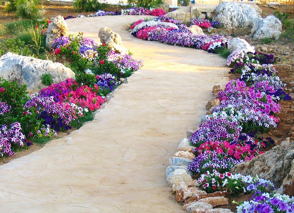 بالصور صور عن الورد , الجمال الطبيعى فى صور الورود 285