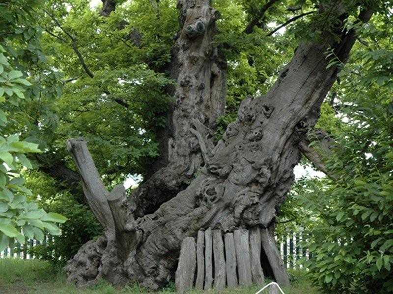 بالصور صور اشجار , اجمل المناظر الشجار طبيعيه 291 1
