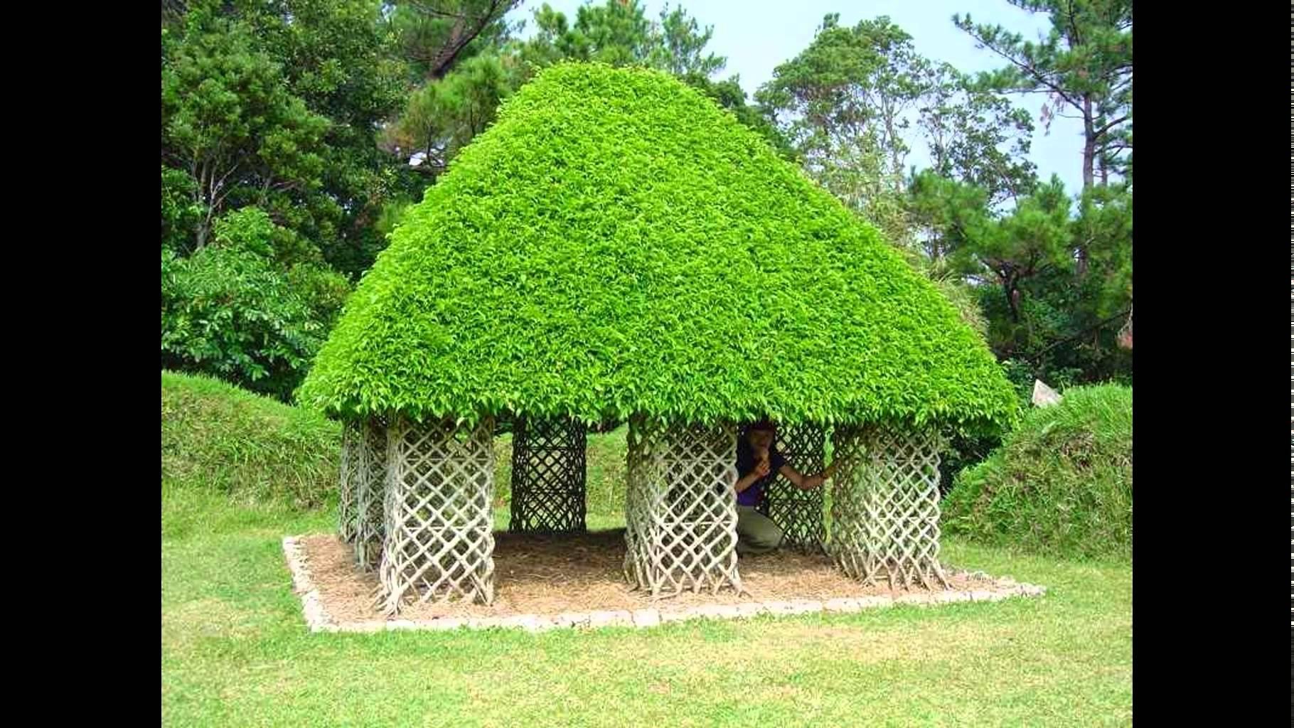 بالصور صور اشجار , اجمل المناظر الشجار طبيعيه 291 10