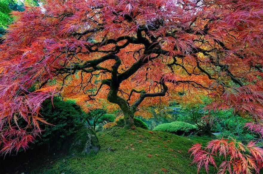 بالصور صور اشجار , اجمل المناظر الشجار طبيعيه 291 3