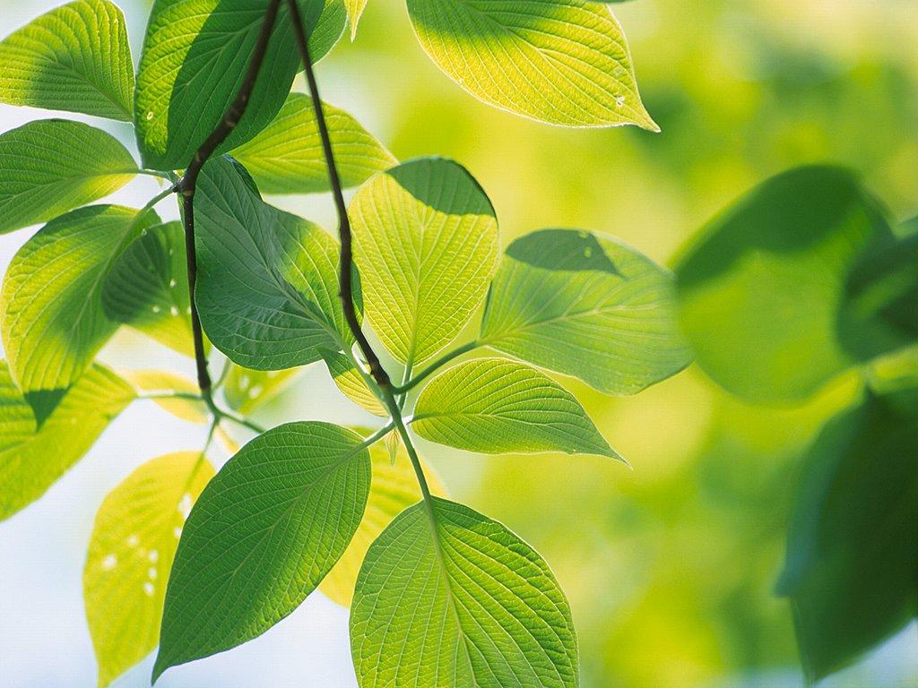 بالصور صور اشجار , اجمل المناظر الشجار طبيعيه 291 4