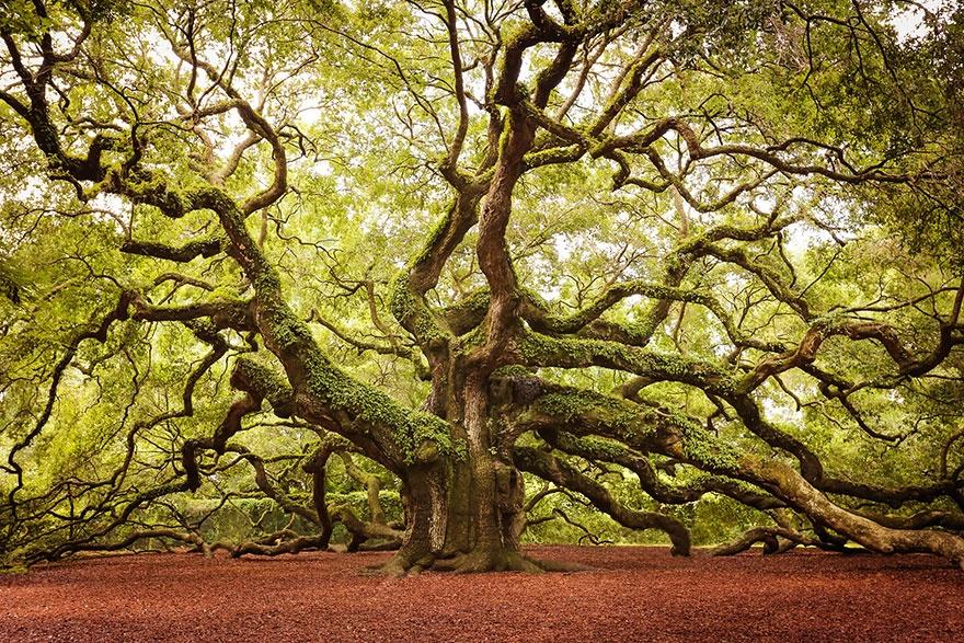 بالصور صور اشجار , اجمل المناظر الشجار طبيعيه 291 6