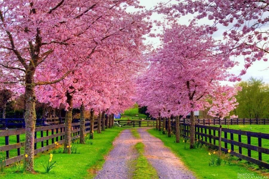 بالصور صور اشجار , اجمل المناظر الشجار طبيعيه 291 7