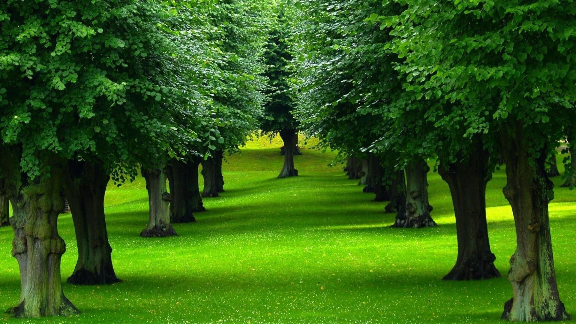 بالصور صور اشجار , اجمل المناظر الشجار طبيعيه 291 9