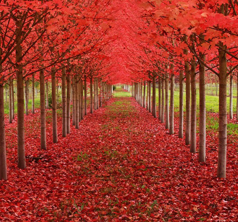 بالصور صور اشجار , اجمل المناظر الشجار طبيعيه