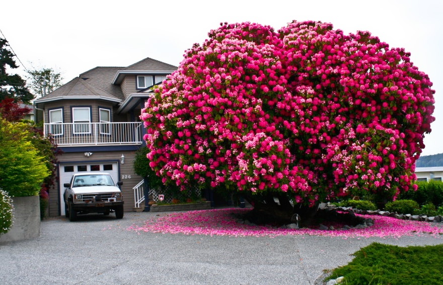 بالصور صور اشجار , اجمل المناظر الشجار طبيعيه 291