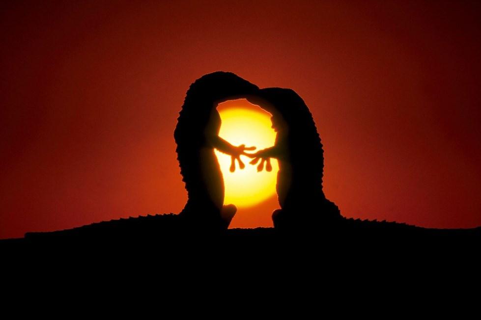 بالصور صور عن الحب , صور الحب والعشق وكلمات جميله 419 2