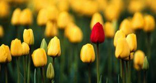 صوره خلفيات ورد , اجمل خلفيات الورود والمناظر الطبيعيه