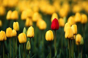 صور خلفيات ورد , اجمل خلفيات الورود والمناظر الطبيعيه