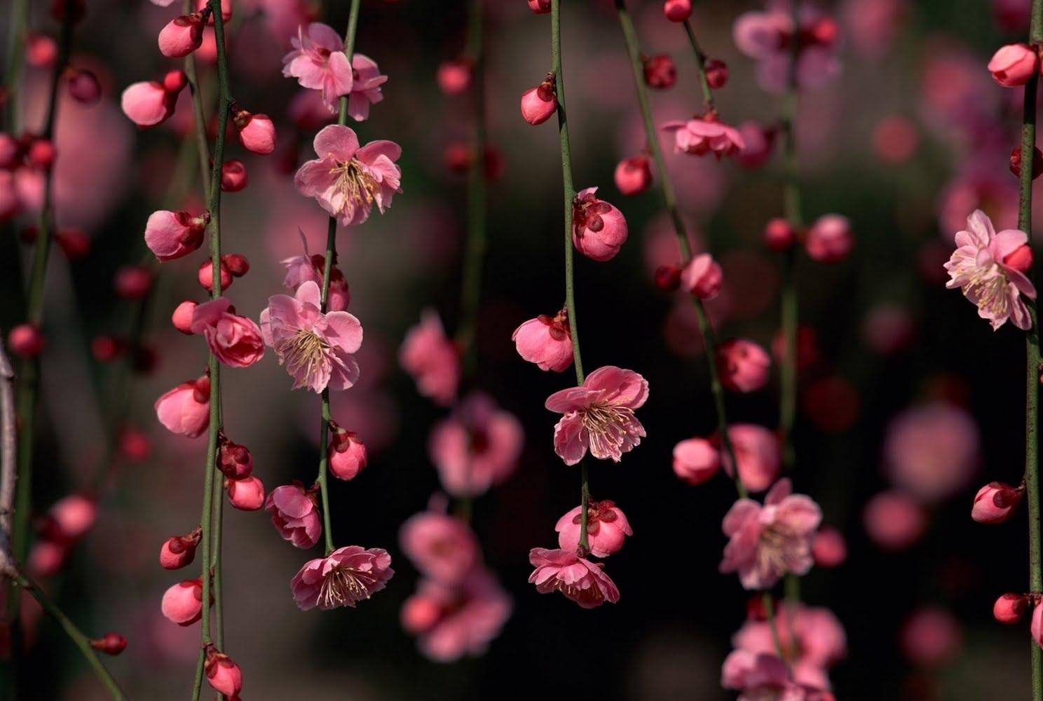 بالصور صور ورد خلفيات , فنون اختيار الخلفيات الطبيعيه و الورود 636 10