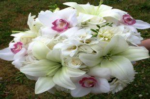 صور صور ورد خلفيات , فنون اختيار الخلفيات الطبيعيه و الورود
