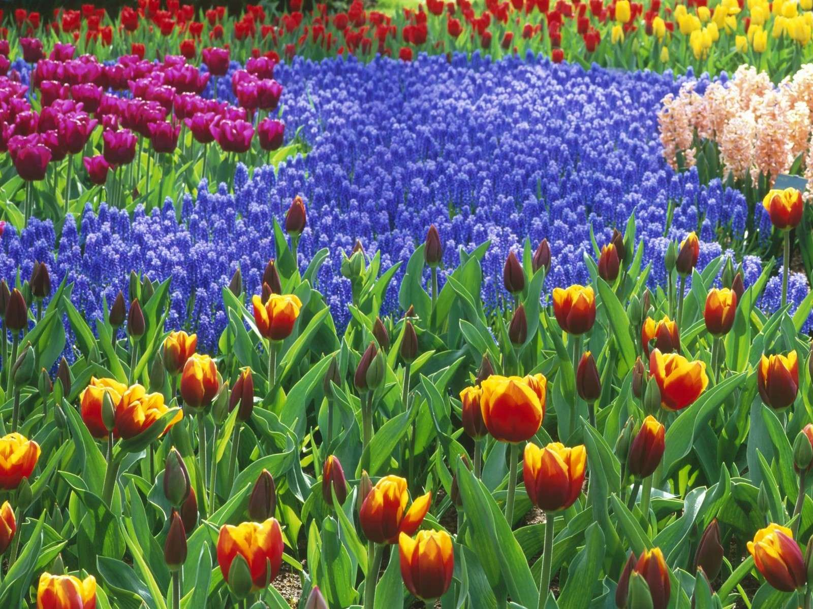 بالصور صور ورد خلفيات , فنون اختيار الخلفيات الطبيعيه و الورود 636 2