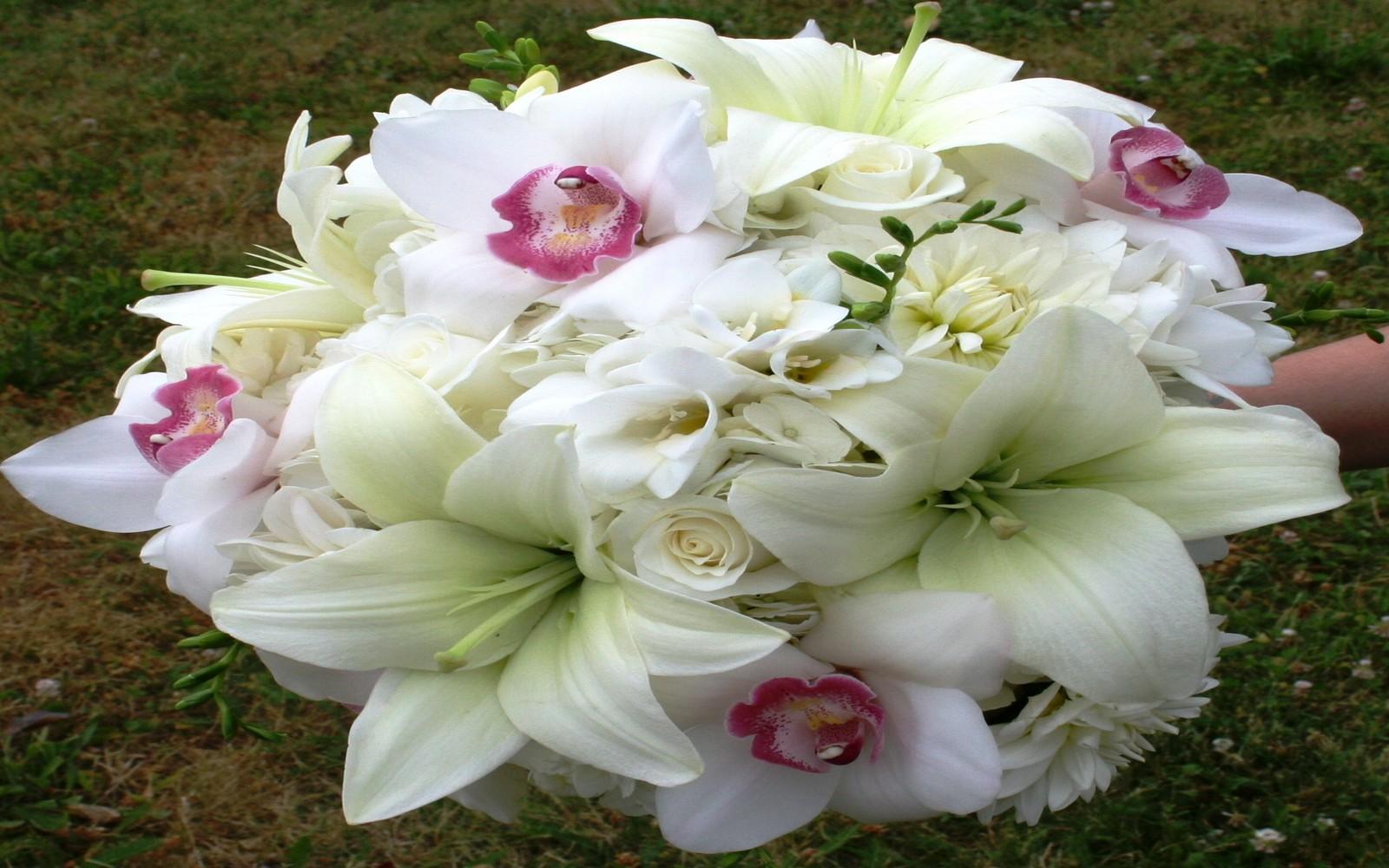 صوره صور ورد خلفيات , فنون اختيار الخلفيات الطبيعيه و الورود