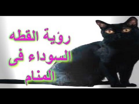 صورة رؤية القطط بالمنام , تفسير رؤية القطط فى المنام