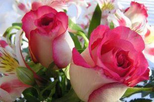 صور صور ورود حلوه , اجمل خلفيات لازهار طبيعية