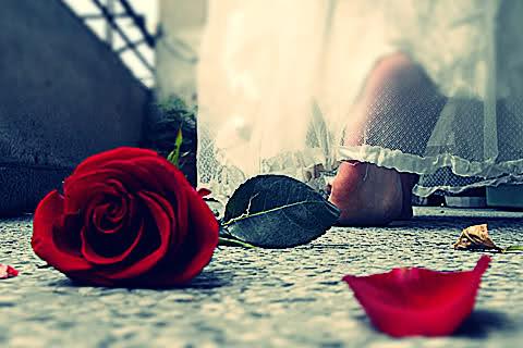 بالصور خلفيات رومانسية , احدث صور خلفيات الحب والغرام 819 12