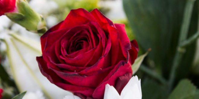 صور صور احلى ورد , اجمل الزهور المتنوعه