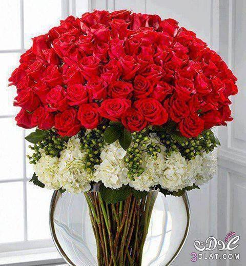 بالصور صور احلى ورد , اجمل الزهور المتنوعه 3936 2