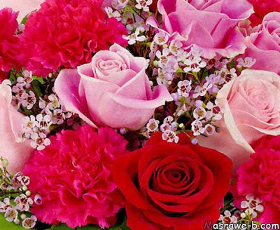 بالصور صور احلى ورد , اجمل الزهور المتنوعه 3936 3