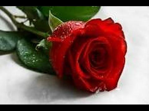 بالصور صور احلى ورد , اجمل الزهور المتنوعه 3936 4