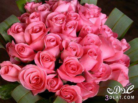 بالصور صور احلى ورد , اجمل الزهور المتنوعه 3936 5