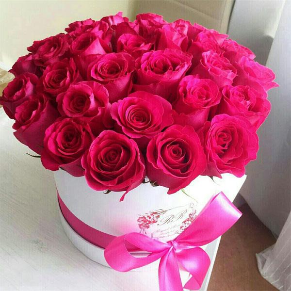 بالصور صور احلى ورد , اجمل الزهور المتنوعه 3936 6