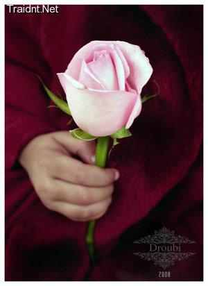 بالصور صور احلى ورد , اجمل الزهور المتنوعه 3936 7