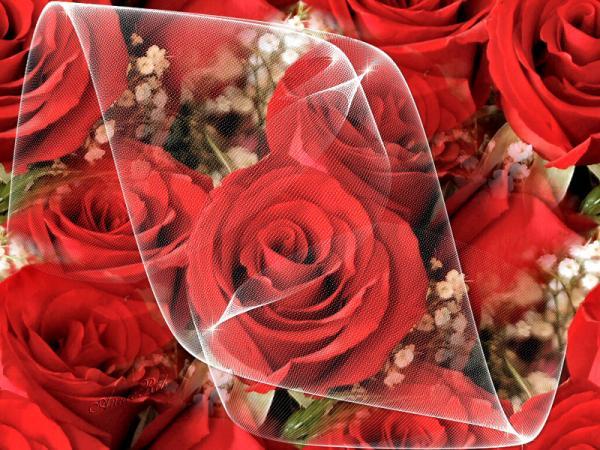 بالصور صور احلى ورد , اجمل الزهور المتنوعه 3936 9