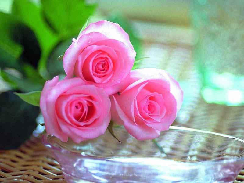 بالصور صور احلى ورد , اجمل الزهور المتنوعه 3936