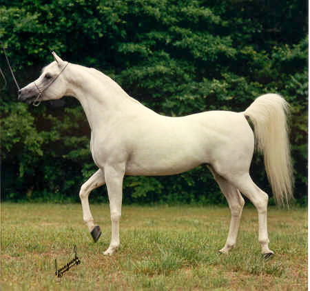 بالصور اجمل حصان في العالم , صور احلى الخيول فى العالم 5552 10