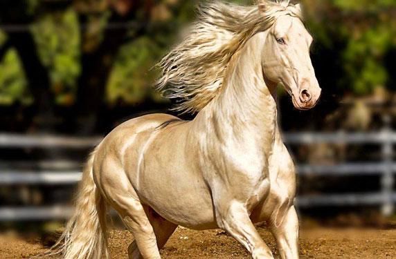 بالصور اجمل حصان في العالم , صور احلى الخيول فى العالم 5552 11
