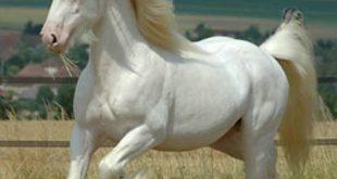 صورة اجمل حصان في العالم , صور احلى الخيول فى العالم